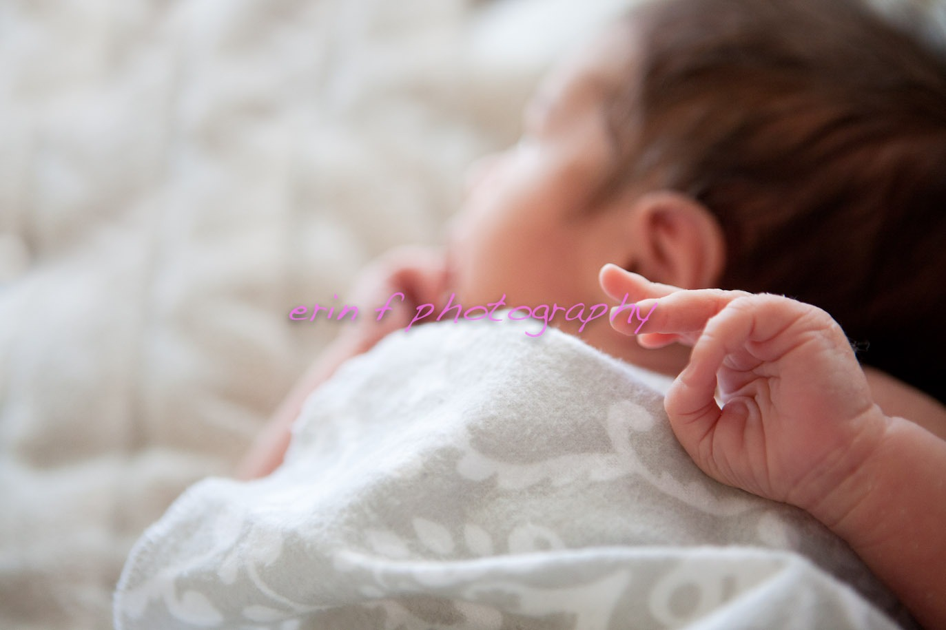 Sweet Newborn ::  Newborn Photographer